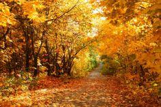 cuadros de otoño - Búsqueda de Google