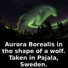 This looks freaking cool! Werewolf Quotes, Werewolf Art, Facts About Wolves, Animal Espiritual, Animals And Pets, Cute Animals, Wolf Eyes, Spiritual Animal, Lone Wolf