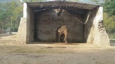 After nearly three decades of being shackled and alone in a zoo, Kaavan the elephant will finally get a taste of freedom. Kaavan has been approved to move to a sanctuary where he will be surrounded by elephant friends and a more natural environment. Sign this petition and thank the team who helped bring Kaavan freedom.