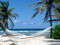 hammock Pictures, Images and Photos