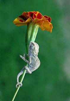 hanging on.:
