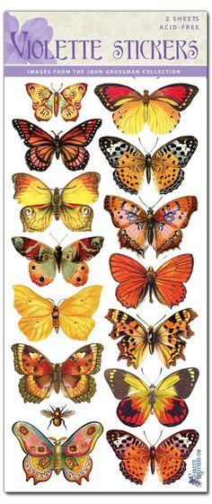 C45-Orange Butterflies
