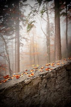 Orange leaves on a rock in the middle of a scenic, foggy forest on the Romantic Road near Fussen, Germany © John Bragg Photography