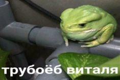 Stupid Memes, Funny Jokes, Hello Memes, Happy Memes, Russian Memes, Best Memes Ever, Fun Live, Lol League Of Legends, Mood Pics