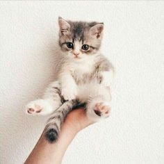 Cute Cats Grey Cute Kittens Playing With Puppies Animals And Pets, Baby Animals, Funny Animals, Funny Cats, Adorable Animals, Animals Images, Animals Kissing, Cute Animals Puppies, Animal Funnies