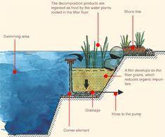 As piscinas biológicas ou ecológicas podem ser descritas como um sistema no qual não são utilizados cloro ou outros  produtos químicos para o tratamento de sua água.