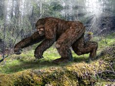 many sightings have included reports about Sasquatches running on all fours..Rob Roy Menzies incredible portrait shows exactly this..visit the store for this and more amazing art on a variety of high quality products!  http://www.cafepress.com/cryptoaddicts2