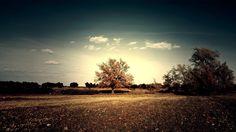 Vintage autumn.