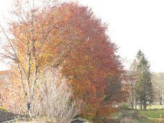 autumn 2013 Moffat Scotland