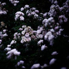 Snow White 03  by Noirblanc777