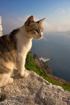 santorini's cat jsut checkin' things out