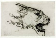John Macallan Swan (1847‑1910)  Head of a Lioness, date not known   Chalk on paper,  127 x 197 mm Collection Tate