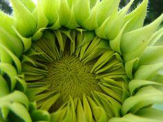 Blommor - gratis skrivbordsbilder: http://wallpapic.se/naturen/blommor/wallpaper-39070