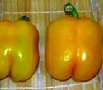 """Pepper Sweet Bell Canary Hybrid- These fruit are 3"""" long to 4"""" wide mature from green to yellow very sweet. Use fresh or cooked in your favorite recipes."""