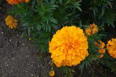 Flores. Parc floral de París.