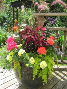 The winning pot features Purple Fountain Grass, Gartenmeister fuchsia, coleus, two varieties of zonal geraniums, blue bacopa, petunia, golden creeping jenny and heliotrope.