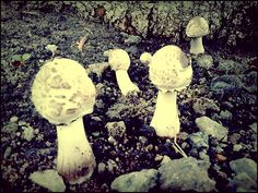 Urban mushroom from Brazil Picture by João Freitas