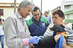 Este sábado, vacunación gratuita para perros y gatos en Risaralda