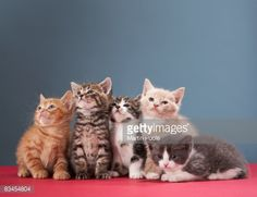 Stock Photo : Portrait of group of kittens