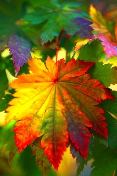 Colorful leaves are the bomb