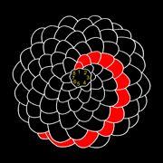 pine cones, flowers + fibonacci numbers