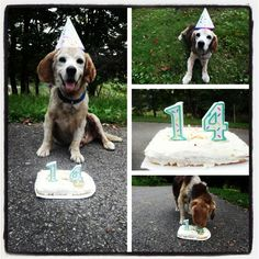Beagle birthday need to do for little girl!!!