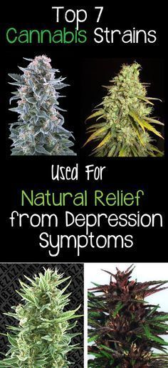 PLEASE SHARE this with a friend or family member who suffers with depression...Top 7 Cannabis Strains used for Natural Relief from Depression Symptoms...