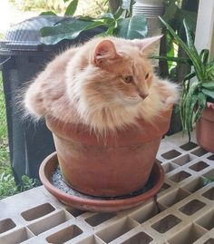 20 Cute Cat-Plants You Shouldn't Water Silly Cats, Crazy Cats, Cats And Kittens, Funny Cats, Chatons Oranges, Funny Poses, Cat Plants, Orange Cats, Ginger Cats