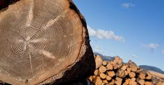 Here you will find a table of timber sizes and quantities in both metric and imperial measurements.