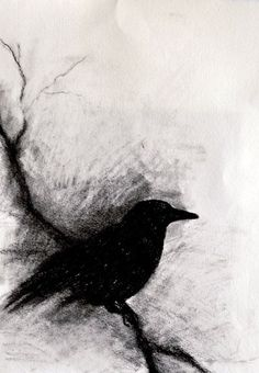 Blackbird on a branch - original charcoal drawing, abstract crow 6x9,5 inch. I love charcoal art