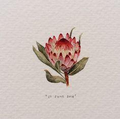 Postcards for Ants: Lorraine Loots' 365 Day Miniature Painting Project - Cube Breaker Protea Art, Protea Flower, Botanical Art, Botanical Illustration, Illustration Art, Illustrations, Fleur Protea, Watercolor Flowers, Watercolor Paintings