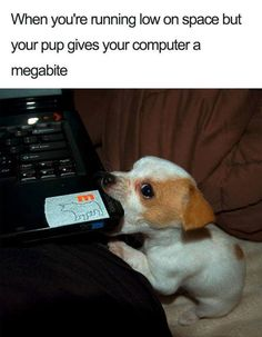 Funny Animal Memes Of The Day – 52 Pics - Lovely Animals World 32 Funny Animals Guaranteed to Make You Laugh This dog got tricked LOL 24 Funny Animal Pictures Of The Da. 9gag Funny, Funny Dog Memes, Funny Animal Memes, Cute Funny Animals, Funny Relatable Memes, Funny Animal Pictures, Memes Humor, Cute Baby Animals, Funny Cute