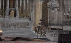 Stag in a church
