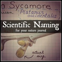 Scientific Naming - Homeschool Mosaics