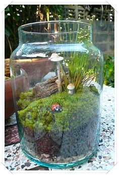 Salt and Vinegar: Marimo: What's so great about it vs moss terrarium