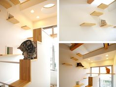 cat playground-My cats would love this! - Rachel Dark-Clinton - cat playground-My cats would love this! cat playground-My cats would love this! Cat Heaven, Japanese Cat, Japanese House, Cat Playground, Cat Climbing, Cat Room, Pet Furniture, Cat Friendly Home, Freundlich