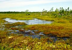 Kouchibouguac National Park - New Brunswick. Kouchibouguac National Park is a fascinating mosaic of bogs, salt marshes, tidal rivers, sparkling freshwater systems, sheltered lagoons, abandoned fields and tall forests which characterizes the Maritime Plain Natural Region. In 2009, Kouchibouguac National Park was declared a Dark Sky Preserve by the Royal Astronomical Society of Canada.
