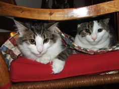 Double trouble, ZsaZsa and Zee, 2011