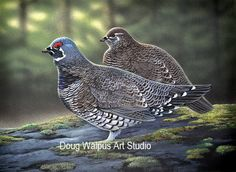 Spruce Grouse, Bird Print, Wildlife Art, Nature, Animal, Birds