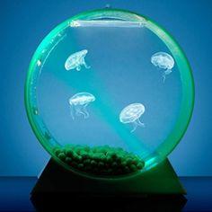 Jelly fish tank.....