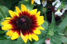 9 kerti virág, amit napos helyre is ültethetsz és még locsolni sem kell! - Bidista.com - A TippLista! Garden Care, Flower Beds, Vegetable Garden, Plants, Yard Maintenance, Vegetables Garden, Vegetable Gardening, Plant, Veggie Gardens