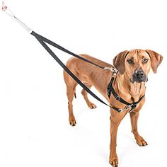 Freedom No Pull Dog Harness and Leash Training Kit Teal 2XL by 2 Hounds * Check out the image by visiting the link. (This is an affiliate link) #CollarsHarnessesLeashes