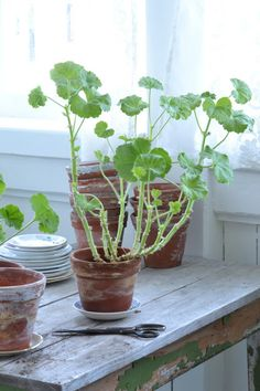 .outdoors in. purify the air with houseplants. cultivate an indoor garden.