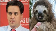 21 Sloths That Look Like Ed Miliband