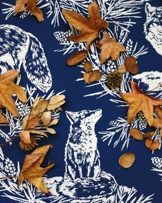 Blue and orange, fox and fall. Fox in the Snow wallpaper from Lake August.