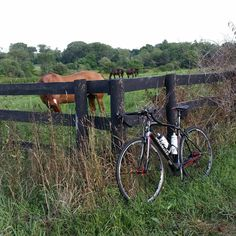 A bicycle, a horse and a butterfly - find out why this picture captures an important reflection for me http://wp.me/p3QFiI-7i
