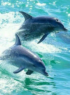 Dolphins are such robust and playful creatures Underwater Animals, Underwater Life, Beautiful Sea Creatures, Animals Beautiful, Animals And Pets, Cute Animals, Dolphin Art, Bottlenose Dolphin, Ocean Creatures