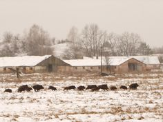 Tracking Wildlife in Chernobyl: The Emotional Landscape of a Disaster Zone | Field Notes