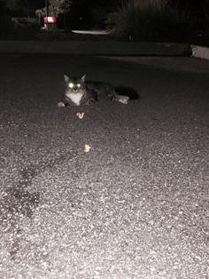Kristen HallmantoCT Lost Pets Cat spotted in stop and shop parking lot in killingly. Does not seem like a stray!!!!very small medium/long calico fur. With a little limp. Dark limes between eyes. With dark brown maybe black fluffy tail.