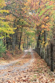 Country Road in Fall Photograph. Autumn Nature Wall Decor.